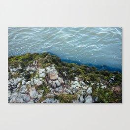 Moss 3 Canvas Print