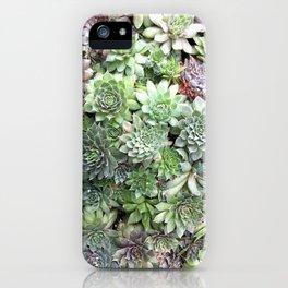 Desert Flower I iPhone Case