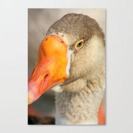 Beak and Eye of a Goose Canvas Print