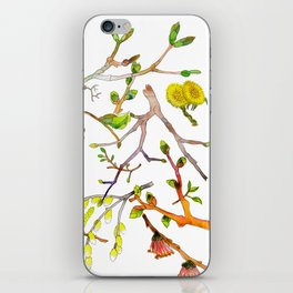 Spring pattern - branches, buds and flowers iPhone Skin
