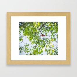 Song from Above Framed Art Print