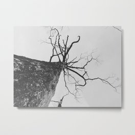 014 | bastrop state park Metal Print