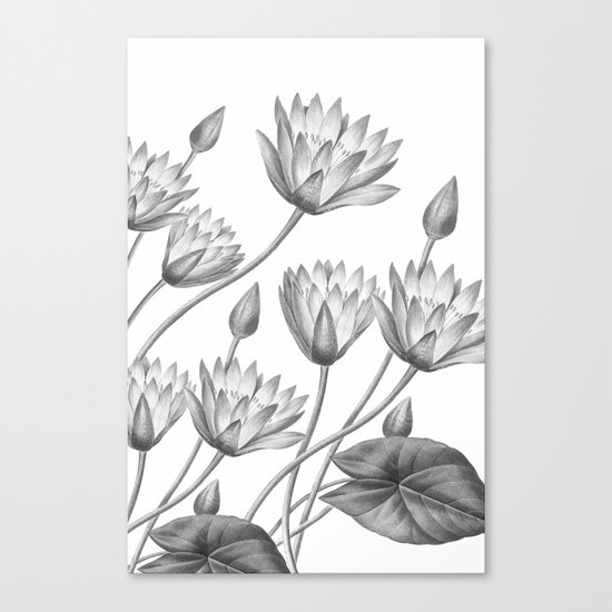 Water Lily Stencil Black And White: Water Lily Black And White Canvas Print By Wheimay