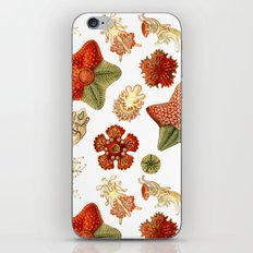 Sea Stars And Star Fish iPhone & iPod Skin