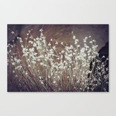 Rock Flowers Canvas Print