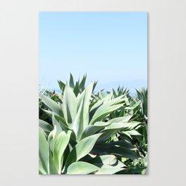 palisades agave Canvas Print