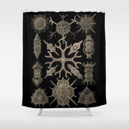 """""""Spumellaria"""" from """"Art Forms of Nature"""" by Ernst Haeckel Shower Curtain"""