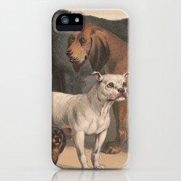 Vintage Dog Breeds Illustration (1874) iPhone Case