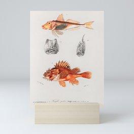 Vintage Print - Universal Dictionary of Natural History (1849) - Gurnard; Scorpionfish Mini Art Print