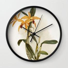 Hybrid of laelia and cattleya species (Llio-cattleya hybrida phoebe) from Reichenbachia Orchids (188 Wall Clock
