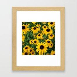 Black-Eyed Beauties Framed Art Print