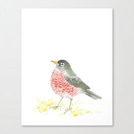 American Robin. Canvas Print