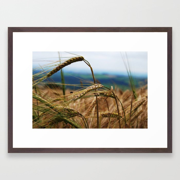summer hay Framed Art Print