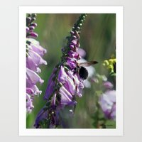 Random bee in my picture Art Print