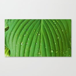 After Spring Rain - Water Droplets on a Leaf Canvas Print