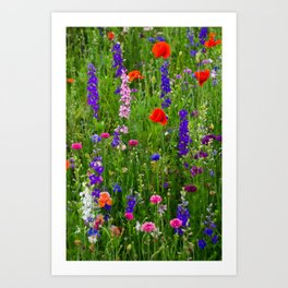 Close-up Wildflowers Art Print