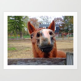 Smiling Horse Art Print