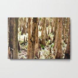 Cyprus Trees Metal Print