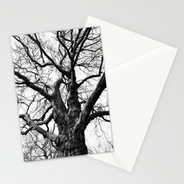 A Web of Branches Stationery Cards
