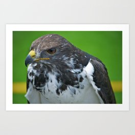 Seahawk Art Print
