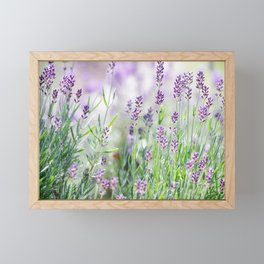 Lavender in summer garden Framed Mini Art Print