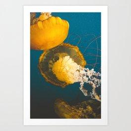 Pacific Sea Nettle Jellyfish II Art Print