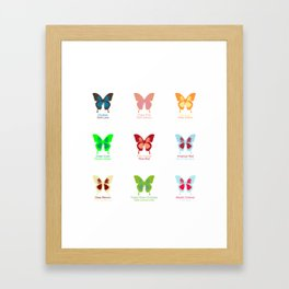 Butterflies 9 Framed Art Print