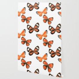 South American Butterflies Wallpaper