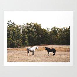 Horses in Conversation Art Print