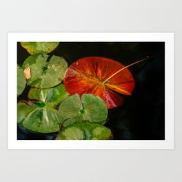 Complementary Color in Nature Art Print