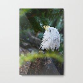 Looking Up American Bold Eagle Metal Print