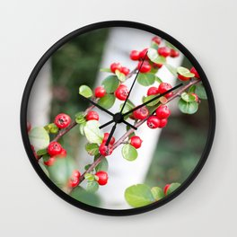 Red berries and birch trees Wall Clock