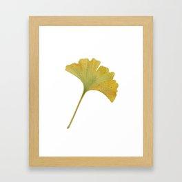 watercolour ginkgo Framed Art Print