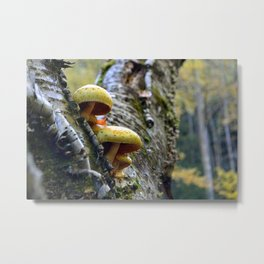 Yellow Mushrooms Metal Print