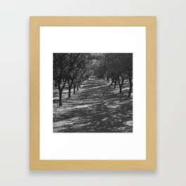 Black & White Almond Orchard Pencil Drawing Photo Framed Art Print
