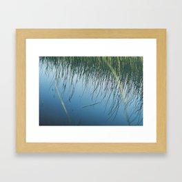 Lake reeds Framed Art Print