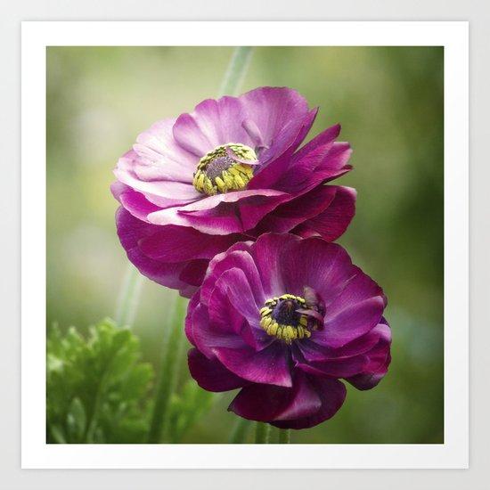 Spring Botanical -- Garden Ranunculus Art Print