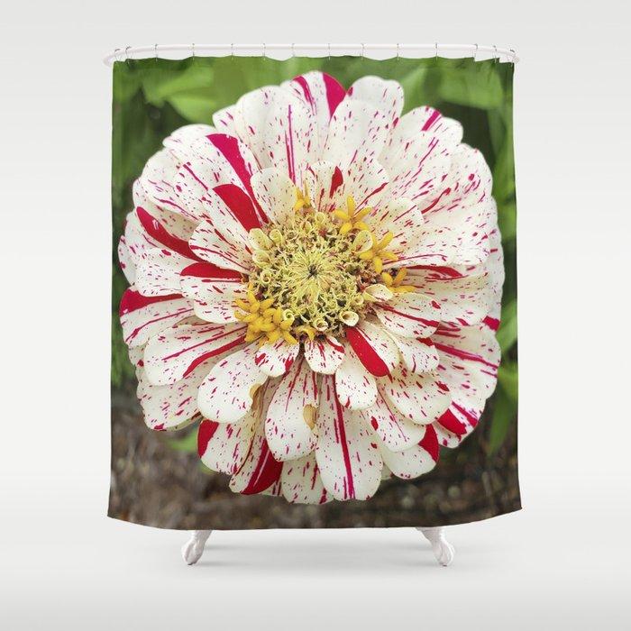 Candy Cane Zinnia Shower Curtain