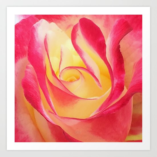 Summer Rose Untouched Art Print
