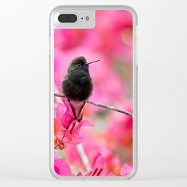 Black Bellied Hummingbird from Costa Rica Clear iPhone Case