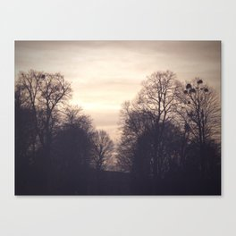 dreamy trees Canvas Print