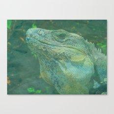 Wild Iguana Canvas Print