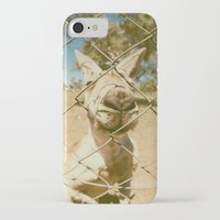 kangaroo iPhone & iPod Cases featuring Kangaroo by Ellenor Argyropoulos