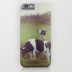 Rustic Cows Slim Case iPhone 6