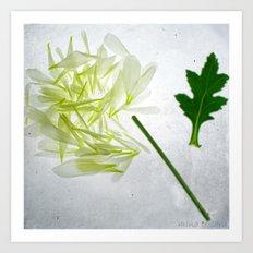 Botanical Blueprints - Dahlia Art Print