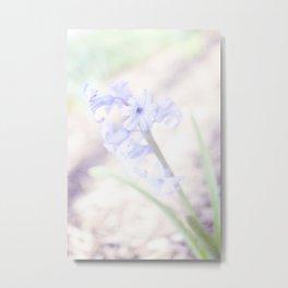 Hyacinth rush Metal Print