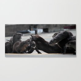 Otter Fight Canvas Print