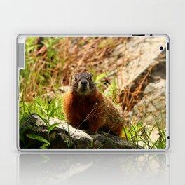 Marmot On A Rock Laptop & iPad Skin