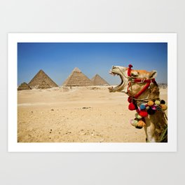 Camel eating the Pyramids in Egypt Art Print