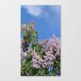 Lilacs No. 3  Canvas Print
